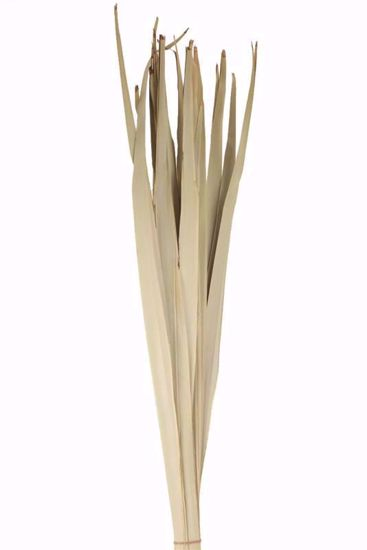 Picture of Natural Palm Reed